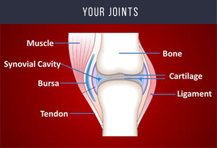 joints graph